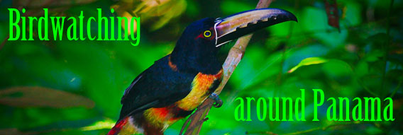 Bird Watching Locations in Panama