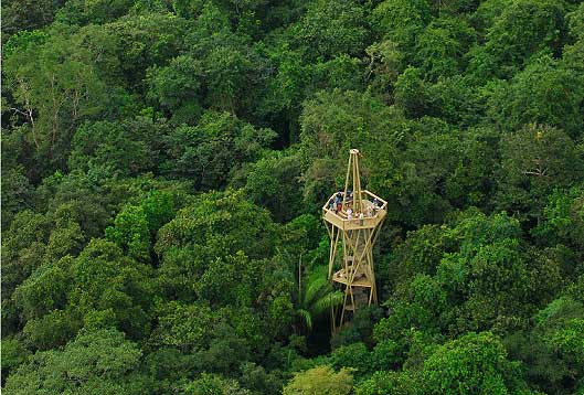 Rainforest Observation Tower