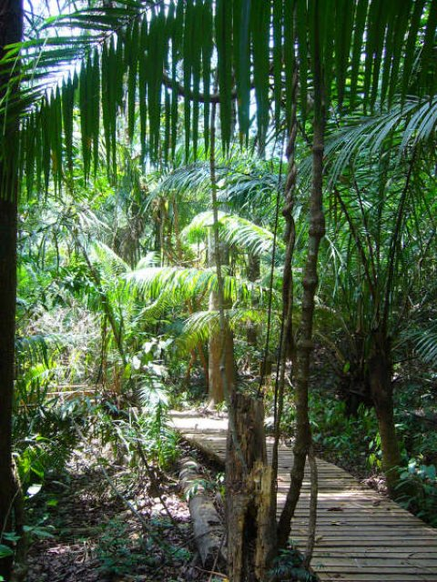 Rainforest Hike Ways